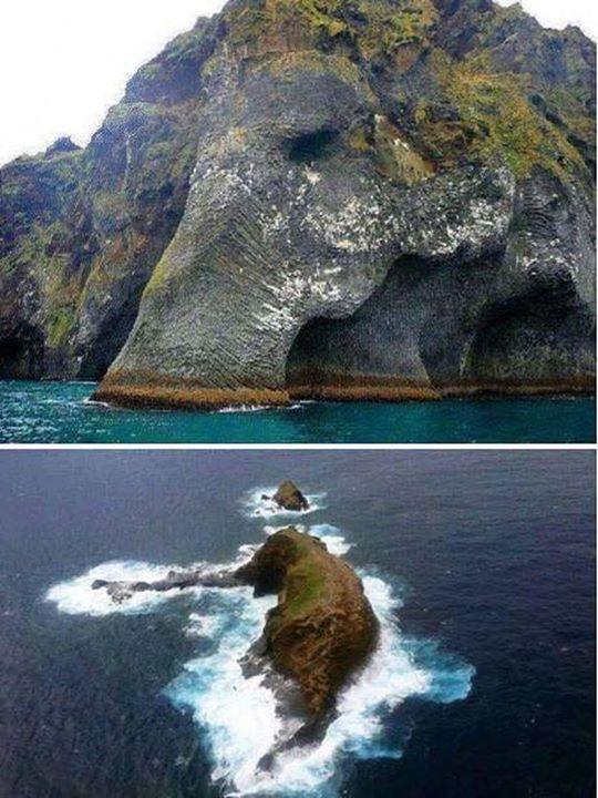 大象在冰島玩耍
